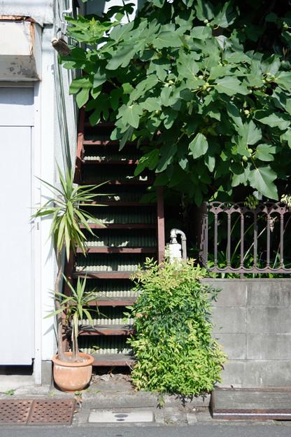 Photos: 緑の階段