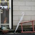 Photos: 脚立と傘