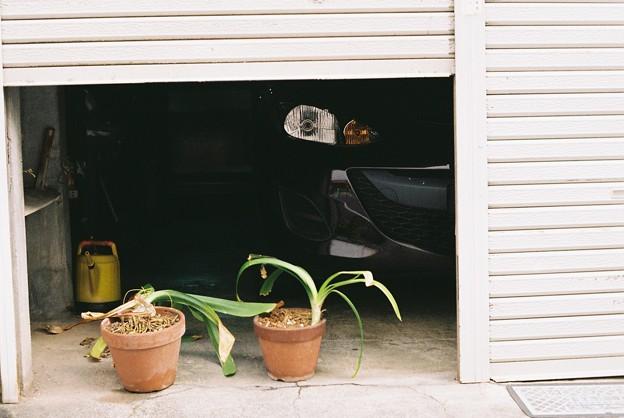 二つの鉢植