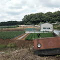 Photos: 畑に
