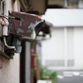 Photos: 配線