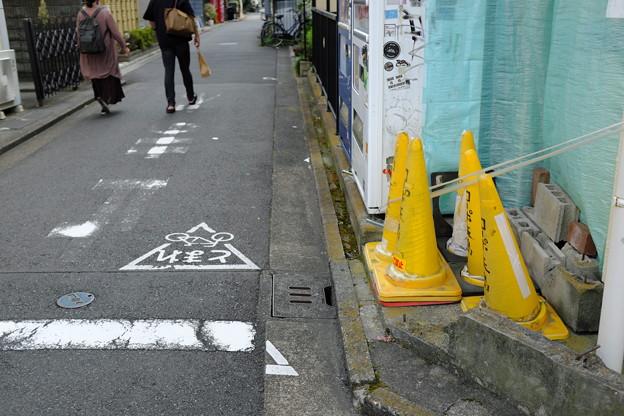 Photos: コーン達
