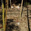 Photos: 竹林猫