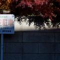 Photos: 青空駐車