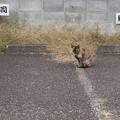 Photos: 寿司猫