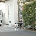 Photos: お散歩まぁだ?