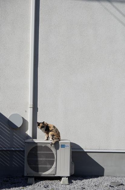Photos: 室外機猫