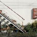 Photos: 鉢植階段