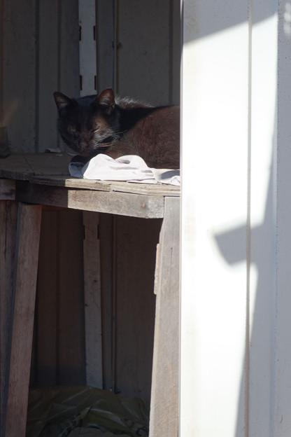 物置小屋の猫