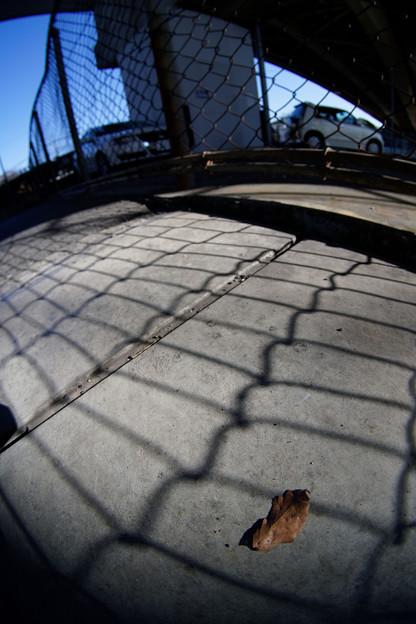 Photos: フェンスと落葉