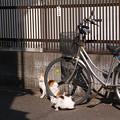 Photos: 犬に注意