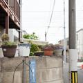 Photos: 塀の上
