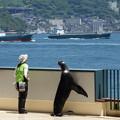 関門海峡とオタリアの「マウ」   DSC08809