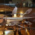 シーラカンス (いのちのたび博物館)   DSC05313