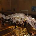 鯨類の祖先 (いのちのたび博物館)   DSC05413