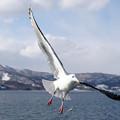 写真: 冬翔