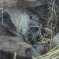 Photos: fukushima140607196