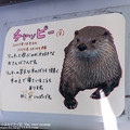 写真: kushiro180105001