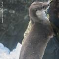 Photos: zoorasia180126025