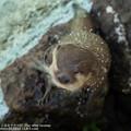 Photos: alohagarden19050400255