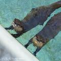 Photos: alohagarden19050400307