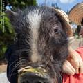Photos: alohagarden19050400499