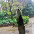 tokushima19031000027
