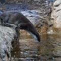 Photos: zoorasia20020900021