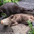 Photos: alohagarden20072400371