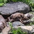 Photos: alohagarden20072400402