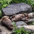 Photos: alohagarden20072400426