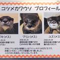 Photos: echizen20071700012
