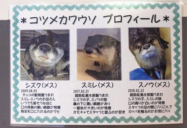 Photos: echizen20071700014