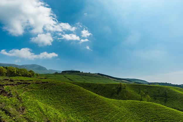 写真: 久住高原