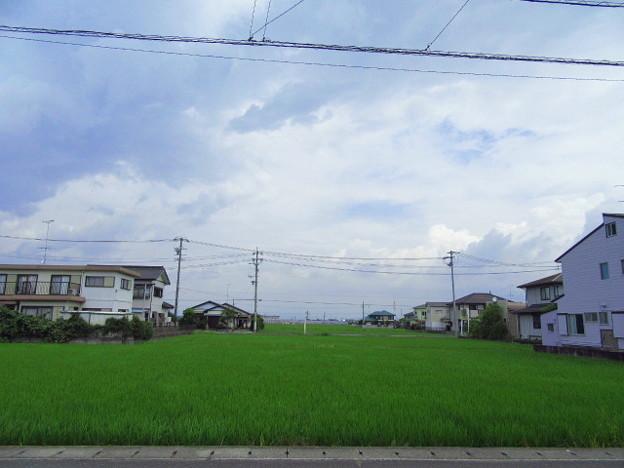 11日のお天気