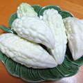 純白ゴーヤの収穫