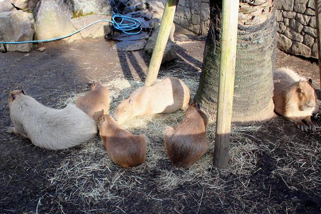 サボテン動物公園