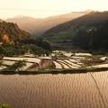 Photos: 四谷の千枚田