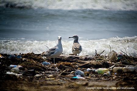 漂着塵と海鳥