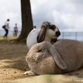 Photos: ウサギ