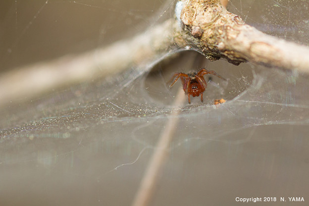 Spiders_0335