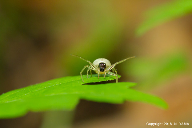 Spiders_0345