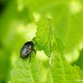 yamanao999_insect2018_117