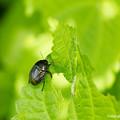 写真: yamanao999_insect2018_117