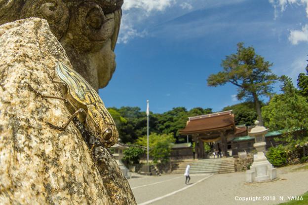 写真: ウバタマムシ