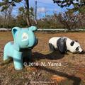 写真: ゾウとパンダ