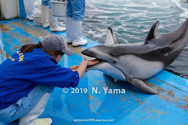 Photos: カマイルカの健康診断