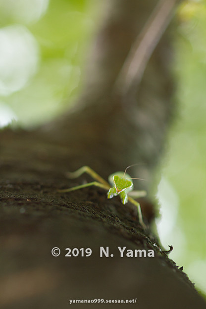 yamanao999_insect2019_104