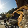 Photos: オオカマキリ
