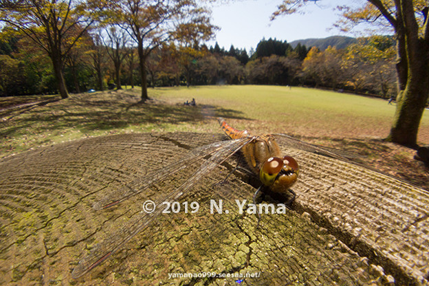 yamanao999_insect2019_131